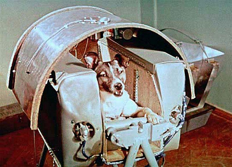 Животные в космосе Лайка